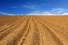 Dry field Royalty Free Stock Images