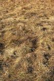 Dry field Royalty Free Stock Photo