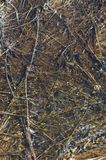 Grass with ooze. Dry field grass under running melt water, covered with ooze and slime royalty free stock images