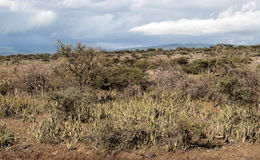 Dry fields in the serengeti Stock Photography