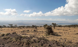 Dry fields in the serengeti Stock Photos
