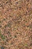 Dry fir needles background Stock Photos