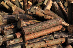 Dry firewood Stock Images