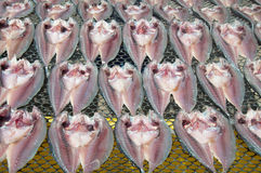 Dry fish. Small dry fish used in Asian cuisine Royalty Free Stock Photography
