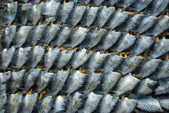 Dry fish Stock Photos