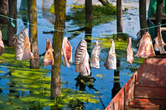 Dry fish. Beautiful scenery at the Erhai Lake, Yunnan, China Stock Image