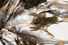 Dry fish and alive crayfish on white background. Royalty Free Stock Photos