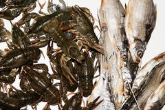 Dry fish and alive crayfish on white background. Stock Photos