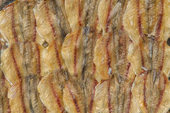 Dry fish background and texture Royalty Free Stock Photo