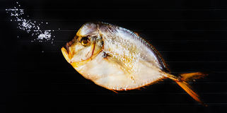 Dry fish on black metal background. Top view Stock Image