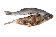 Dry fish close up Stock Image