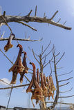 Dry fish formentera stock image