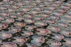 Dry fish Stock Photography