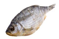 Dry fish macro Stock Photos