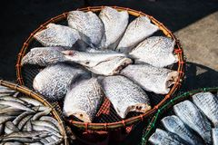 Dry fish in market Royalty Free Stock Images
