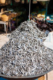 Dry fish in the market in Tunisia Stock Photography