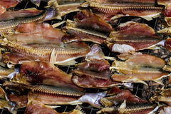 Dry fish on the net Stock Images
