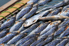 Dry fish Royalty Free Stock Images
