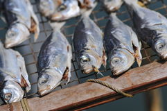 Dry fish Stock Image