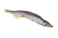 Dry fish. Dry Russian capelin Mallotus villosus fish on white background Royalty Free Stock Photo