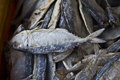 Dry fish Stock Images