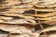 Dry fish. Some dried fish in the shine Stock Photos