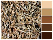 Dry fish texture with palette color swatches Royalty Free Stock Photography