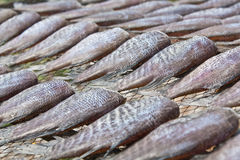 Dry fish. The traditional food preservation in Samutthaprakhan Thailand stock photo
