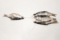 Dry fish  on white background. Dried fish on the table. Salty dry river fish on a white background. Dead dry salty fish - snack to beer.  on white Royalty Free Stock Photos