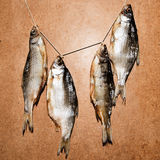 Dry fish  on a wooden background. Dried fish on the table. Salty dry river fish on a wooden impressive background. Dead dry salty fish - snack to beer.  garland Royalty Free Stock Image