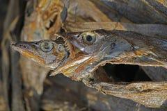 Dry Fishes. At Marketplace, Miao, Arunachal Pradesh, India Royalty Free Stock Image