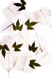 Dry flat leaves Stock Photo
