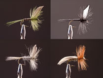 Dry Flies Stock Images