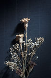 Dry Flower On Black. Background Stock Photo