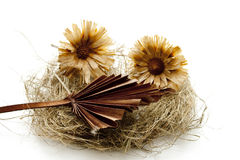 Dry Flower Blossoms On Hay Royalty Free Stock Images