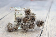 Dry flower and burdock oil jar Stock Photos