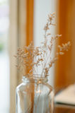 Dry flower home  decoration Stock Photo
