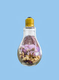 Dry flower in light bulb on blue background Stock Photos
