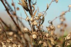 Dry flower Stock Photos