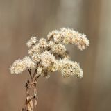 Dry flower in nice blurry natural background Stock Photo