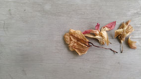 Dry flower on the old wood floor Royalty Free Stock Photo