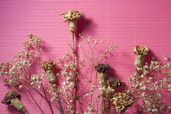 Dry Flower On Pink. Royalty Free Stock Image