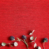 Dry flower on red stripe background Stock Photos