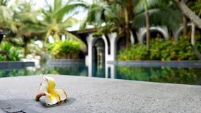 Dry flower on rock by pool. A flower on a rock by a pool surrounded by lush tropic vegetation, Vietnam Stock Images