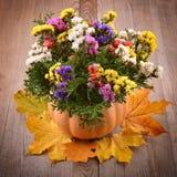 Dry flower. Stock Image