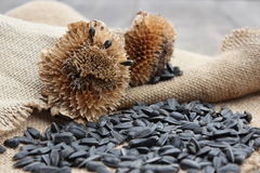 Dry flower and sunflower seeds on a sacking. Wooden boards Stock Images