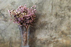 Dry flower in tall and transparent vase Stock Images