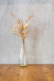 Dry flower in tall and transparent vase Royalty Free Stock Photography