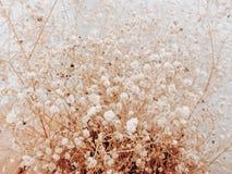 Dry flower vintage soft background Stock Images