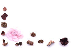 Dry flower Stock Photography